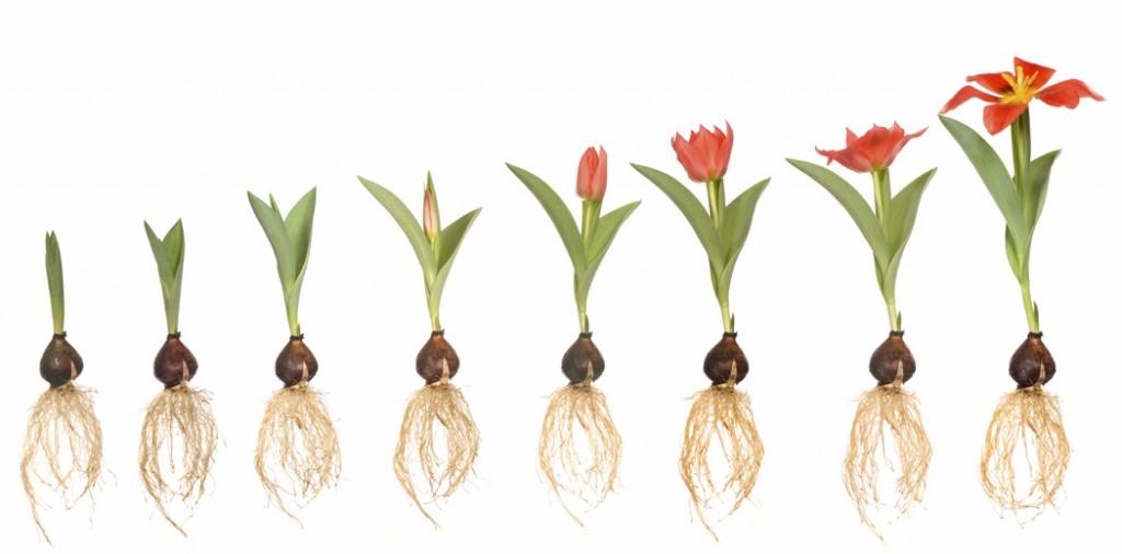 grow startup
